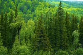 фото с сайта www.radikal.ru